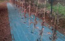Végétaux et plantes en racines nues