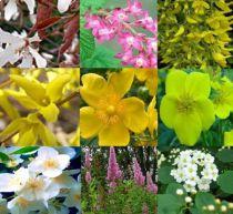 Assortiment de 9 arbustes à floraison printanière et estivale : Taille 40/60 cm - Racines nues