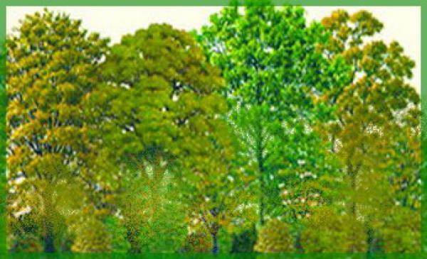 kit haie brise vent n 2 36 plants pour r aliser 35 m tres de plantation lin aire racines nues. Black Bedroom Furniture Sets. Home Design Ideas
