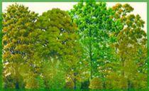 Kit haie brise vent n°2 : 36 plants pour réaliser 35 mètres de plantation linéaire - Racines Nues