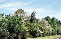 Kit haie champêtre : Racines nues