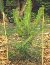 Manchon protecteur pour jeunes plantations : 25 pièces / 50 Tuteurs
