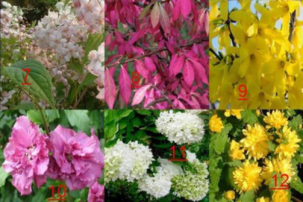 KIT HAIE MIXTE 'ÉCLAT' : Assortiment de 26 arbustes