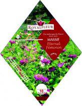 Mélange de Fleurs MASSIF Eternel Féminin : 1.8 m²