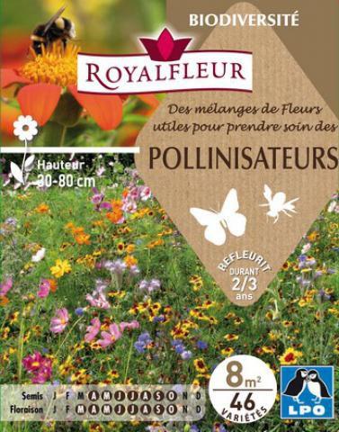 Mélanges de Fleurs pour POLLINISATEURS : pour 8 m²