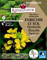 Des Fleurs utiles pour ENRICHIR LE SOL Moutarde Blanche : pour 8 m²