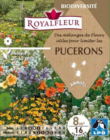 Mélanges de Fleurs utiles pour limiter les PUCERONS : pour 8 m²
