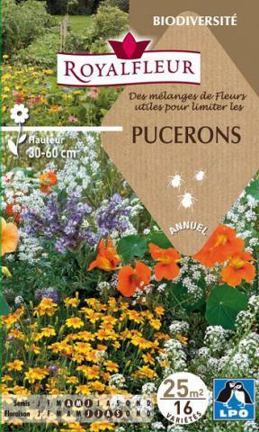 Mélanges de Fleurs utiles pour limiter les PUCERONS : pour 25 m²