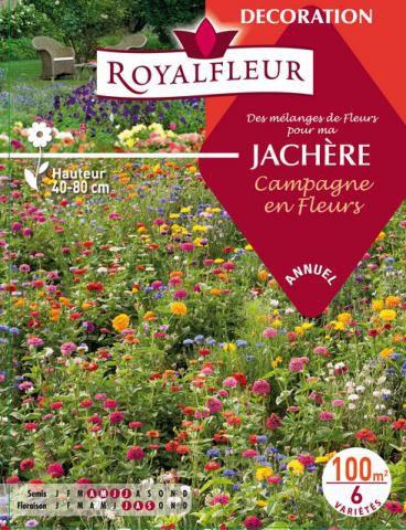 Mélanges de Fleurs Spécial JACHÈRE Campagne en Fleurs : 100 m²