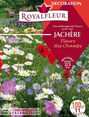 Mélanges de Fleurs Spécial JACHÈRE Fleurs des Champs : 100 m²