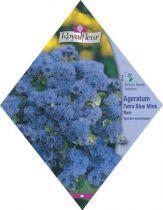 AGERATUM Tetra Blue Mink Nain