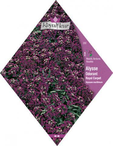 ALYSSE ODORANT Royal Carpet