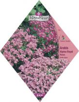ARABIS ALPINA Royal Rosea