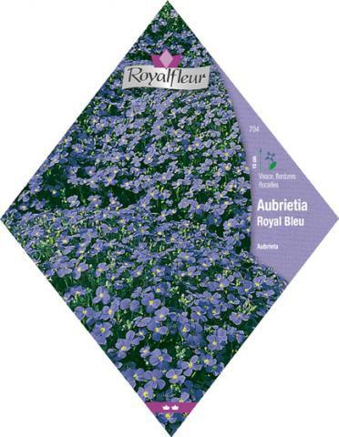 AUBRIETE Royal Bleu