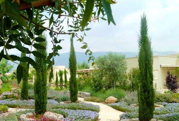 Cyprès d'Italie, de Provence 'Totem' : taille 100/120 cm - pot de 5/10 litres