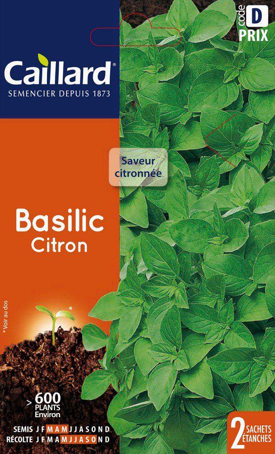 BASILIC - CITRON  : Saveur citronnée