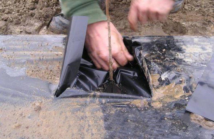 Collerettes de paillage en polyane noir : 10 pièces - 30x30 cm / 40x40cm / 50x50cm
